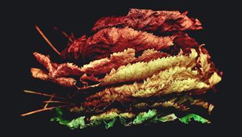 Que deviennent les feuilles mortes ?